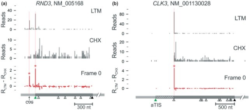 Detection of protein isoforms with alternative N-termini. Panel (a) shows an N-terminally extended isoform of the human RND3 gene which has an in-frame CUG initiating codon. Panel (b) shows a truncated isoform of the human CLK3 gene which was found to initiate at an AUG codon downstream of the annotated AUG start codon (Reprinted with permission from Ref 12. Copyright 2012 National Academy of Sciences USA.)