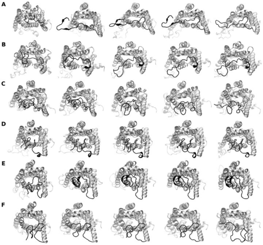 Top-view snapshots of the Arg and Gly variants of β2AR during the course of the simulation.The snapshots are shown at time intervals of 250 ns. Panel A, B and C represent simulation number 1, 2 and 3 of the Arg variant and panel D, E and F represent simulation number 1, 2 and 3 of the Gly variant, respectively. The protein is rendered as ribbons and the N-terminal residues are colored black.