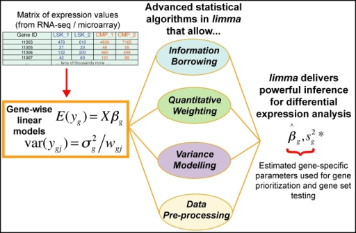 Schematic of the major components that are central to any limma analysis. For each gene g, we have a vector of gene expression values (yg) and a design matrix X that relates these values to some coefficients of interest (βg). The limma package includes statistical methods that (i) facilitate information borrowing using empirical Bayes methods to obtain posterior variance estimators (), (ii) incorporate observation weights (wgj where j refers to sample) to allow for variations in data quality, (iii) allow variance modelling to accommodate technical or biological heterogeneity that may be present and (iv) pre-processing methods such as variance stabilization to reduce noise. These methods all help improve inference at both the gene and gene set level in small experiments.