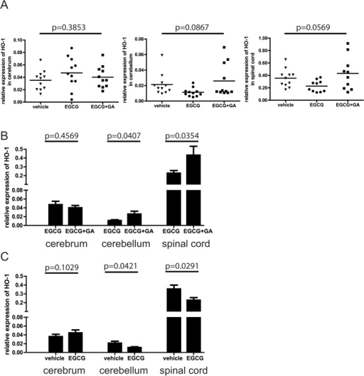 Addition EGCG therapy leads to decreased expression of heme oxygenase-1 (HO-1).A: Relative mRNA expression of HO-1 in cerebral and cerebellar regions as well as spinal cords of mice treated with vehicle control, EGCG alone, or in combination with GA. (ANOVA). B: Relative expression of HO-1 in mice treated with EGCG compared to mice treated with EGCG+GA C: Relative expression of HO-1 in mice treated with EGCG compared to control vehicle treated animals (t-test).