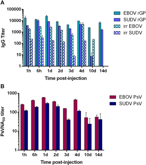 Bioavailability of purified EBOV/SUDV human pAbs in mice.BALB/c mice (N = 10) received a single IP injection of 100 mg/kg of the purified V3 EBOV/SUDV human pAbs. (A) Sera collected from individual mice at the indicated time points after injection were analyzed by standard ELISA for total human IgG using whole-irradiated EBOV or SUDV antigen, and EBOV rGP or SUDV rGP antigen. (B) Serum samples were also evaluated for EBOV- and SUDV-neutralizing activity by PsVNA.
