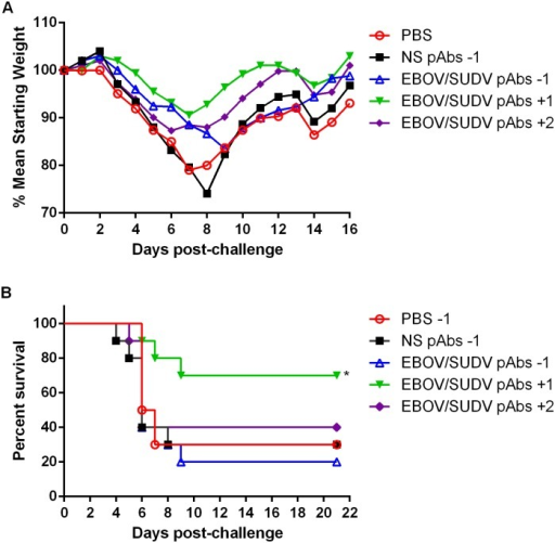 Weight loss and survival of BALB/c mice challenged with maEBOV when administered purified EBOV/SUDV human pAbs before or after challenge.Groups of BALB/c mice (N = 10) received a single IP injection of PBS, 100mg/kg NS pAbs, or 100mg/kg EBOV/SUDV pAbs one day before, or one or two days after challenge with 1000 pfu of maEBOV by IP injection. (A) Mean weight was determined daily for each dosing group and graphed as the percent mean of the starting weight. (B) Kaplan-Meier survival curves indicating the percentage of surviving mice at each day of the 21-day post-challenge observation period are shown. Survival of mice receiving the NS pAbs compared to the EBOV/SUDV pAbs one day before challenge (p = 0.9573), NS pAbs vs EBOV/SUDV pAbs one day after challenge (p = 0.0449), and NS pAbs vs EBOV/SUDV pAbs two days after challenge (p = 0.5720). Significant differences between survival curves are denoted by (*) where p < 0.05.
