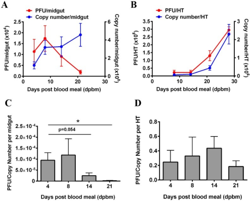 Characterization of DENV-2 replication in the midguts and heads/thoraces of Ae. aegypti following ingestion of an infectious blood meal.(A) In the midgut, viral titers increased linearly until 8 dpbm and declined thereafter. In contrast, viral RNA remained stable between 8 to 21 dpbm. Mean ± SEM, N = 8–10. (B) In the heads/thoraces (HT), the increase in both infectious particles and viral RNA are positively correlated over time. Viral RNA copy number increases with increasing viral titers. Mean ± SEM, N = 8–10. (C-D) A corresponding decrease in PFU/Copy number was observed in the midgut over time, with no significant change in the head/thorax (HT).