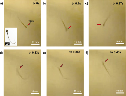 Active artificial sperm. Turn of an acoustically activated sperm-swimmer. (a) No acoustic stimulus. (b) Acoustic energy present in the system felt by the sperm-swimmer. (c)–(e) Sperm-swimmer makes a turn of 180°. (f) Final position.