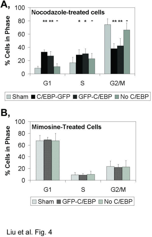 Cells were transfected with the control expression vector (Sham), the transcriptionally active C/EBPα-GFP expression vector or the transcriptionally inactive GFP-C/EBPα expression vector and treated one day later with A, nocodazole or B, mimosine. Cells from the transfections with the C/EBP-GFP and GFP-C/EBP expression vectors were separated into cells with green fluorescence above background levels (C/EBP-GFP and GFP-C/EBP) or at background (No C/EBP). The proportion of cells in the G1, S and G2/M phases were plotted as the mean +/- standard deviation from A, six or B, three independent experiments. Statistically significant differences in the proportion of cells in G1, S or G2/M, relative to the proportions determined for the sham-transfected cells, are indicated (one-way ANOVA: **, p < 0.01; *p < 0.05; -, no difference).