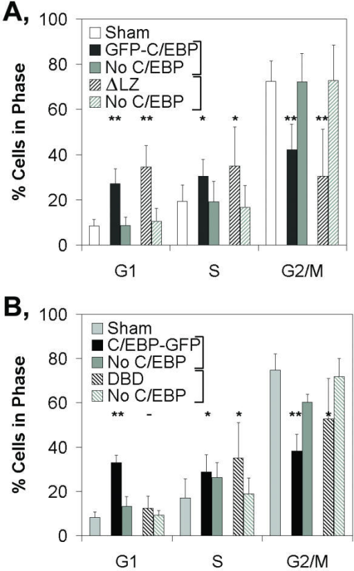 GHFT1-5 cells were transfected with the A, Sham, GFP-C/EBP and ΔLZ expression vectors or B, Sham, C/EBP-GFP and DBD expression vectors and treated with nocodazole. The proportions of cells in G1, S and M phase were determined and plotted as the mean +/- standard deviation from six independent experiments for both A and B. No C/EBP, the subpopulation of cells with background levels of green fluorescence (i.e. did not express GFP-linked C/EBPα). Data from No C/EBP cells are shown adjacent to the green fluorescent cells for each expression construct. Statistically significant differences in the proportion of green fluorescent cells in G1, S or G2/M, relative to the proportions determined for the sham-transfected cells, are indicated (One-way ANOVA: **, p < 0.01; *p < 0.05; -, no difference).