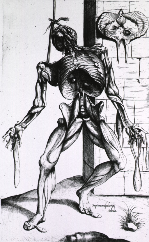 <p>Full length frontal view, standing, of human figure; head tilted back and supported by rope; ribs exposed.</p>