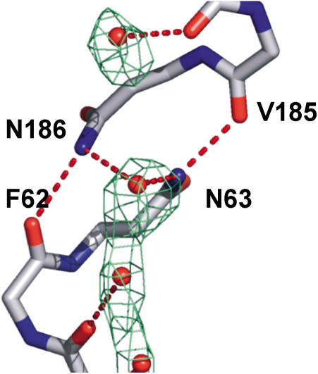 Water at the NPA RegionN63 and N186 donate hydrogen bonds to the central water by projecting their NH2 moieties into the pore. This conformation is aided by a hydrogen bond from the adjacent carbonyls of V185 and F62, respectively. Experimental electron density (2Fobs – Fcalc) is contoured at 0.7 σ.
