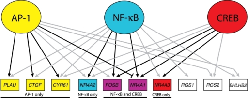 Model of the GSK-3 transcriptional network in quiescent cells.The AP-1 data has been combined with that of CREB [10] and NFκB [12]. Both grey and black arrows indicate ChIP binding by the given factor to the gene's upstream sequence. Black arrows indicate that siRNA against the factor blocked induction of the gene in response to SB-216763 treatment greater than two-fold and statistically significant (p<0.05). The blunt-ended edge between AP-1 and NR4A1 indicates a greater than two-fold inhibition (p<0.05) of induction in the presence of AP-1. RND3 and CCL8 have been excluded from the illustration, as no ChIP binding nor transcription factor knockdown data indicated any functional connections with AP-1, NFκB or CREB.