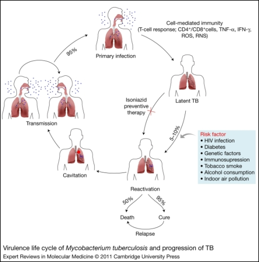 tuberculosis tb is a bacterial infection Mycobacteria are a type of germ there are many different kinds the most common one causes tuberculosisanother one causes leprosy still others cause infections that are called atypical mycobacterial infections.