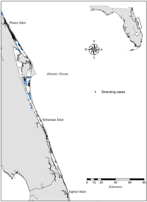 Map of study area.Study area on the central east coast of Florida. The Indian River Lagoon is comprised of three interconnected water bodies separated from the Atlantic Ocean by barrier islands. Records of stranded dolphins that died of asphyxiation are symbolized as blue dots.