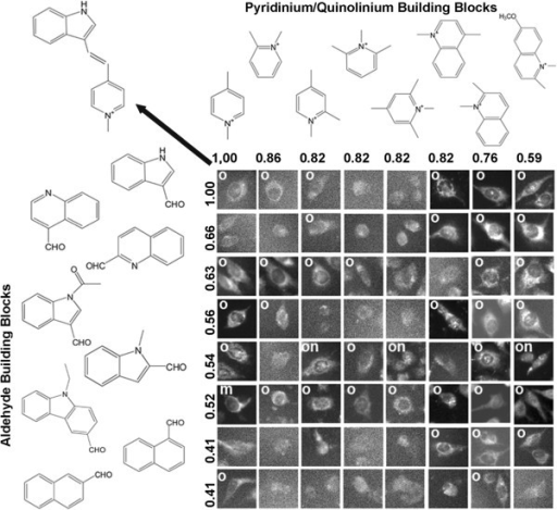 Visualizing the relationship between the staining pattern of a reference probe (located at the upper left corner of the array; probe structure indicated by arrow) and the staining patterns of related compounds. Different aldehyde building blocks are plotted in rows (left) and pyridinium or quinolinium building blocks are plotted in columns (top), in order of their calculated similarity to the building block of the reference compound on the top left. Numbers correspond to the Tanimoto coefficients between the different building blocks and the building blocks of the reference compound at the upper-left most corner of the array. To assemble figures, individual cells representing the staining patterns observed in each image were manually cropped from the images, and labeled based on their apparent organelle (o), membrane (m) or nuclear (n) staining patterns. Cells from images lacking significant signal or ambiguous in localization patterns were not labeled.