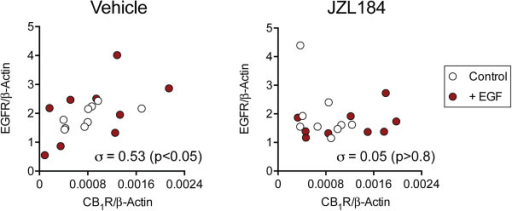Effects of EGF and JZL184 upon CB1 receptor and EGFR expression in PC3 cells. Cells from the second experimental series were incubated with EGF and JZL184 as described in the legend to Figure 2. The EGFR mRNA is shown as a function of the CB1 receptor mRNA, both normalised to β-actin, for the second series cells, each data point being for a given well. Shown in each Panel are the Spearman rho values.