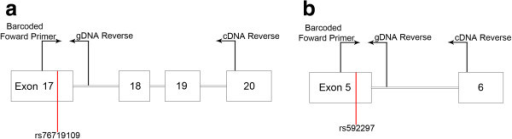 Rs76719109 and rs592297 AEI assays. a) For the exon 17 SNP rs76719109, a barcoded forward primer was positioned in exon 17, and a reverse primer was positioned in intron 17 (genomic samples) or exon 20 (cDNA samples). b) For the exon 5 SNP rs592297 assay, a barcoded forward primer was positioned in exon 5, and a reverse primer was positioned in intron 5 (genomic samples) or exon 6 (cDNA samples).