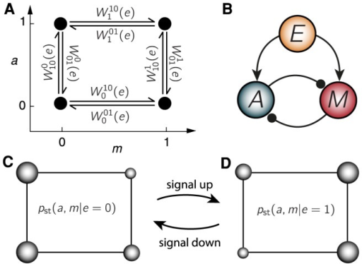 Equilibrium adaptation in a symmetric feedforward SAS.(A) Reaction network of the four states in activity, , memory, , space, with kinetic rates  indicated for each transitions. (B) Topology of the model: feedforward with mutual inhibition. For a fixed signal , a sudden increase in the memory makes the average activity drop, and vice versa for activity changes. This symmetry of the topology, which is at the core of detailed balance, allows an equilibrium construction. (C/D) Representation of steady state probabilities  for low/high  signals using the  space in (A). Wider state diameter represents higher probability, thus lower energy.