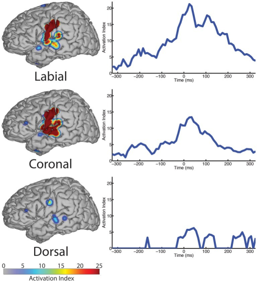 "The spatial topography and temporal dynamics are shown in the left and right columns, respectively, for electrode locations with significant machine learning classification for the ""place"" category levels: labial, coronal, and dorsal."