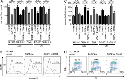 Ectopic DUSP4 expression decreases the viability of DLBCL cell lines by inducing apoptosis. (A) The viability of five different DLBCL cell lines was assessed 72 h after transfection with DUSP4 wt or DUSP4 p.C280S mutant constructs, relative to empty vector–transfected cells (control). Data represent means + SEM of at least three independent experiments. (B and C) Apoptosis of the same DLBCL cell lines as shown in A was assessed 72 h after transfection with DUSP4 wt or DUSP4 p.C280S mutant constructs relative to empty vector–transfected cells (control). A representative annexin V flow cytometry histogram of three independent experiments is shown in B. Data in C represent mean + SEM of at least three independent experiments per cell line. (A and C) *, P < 0.05; **, P < 0.01; ***, P < 0.001, calculated using two-tailed Student's t test. (D) Edu-PI staining of SU-DHL16 cells was performed 72 h after transfection. Representative flow cytometry dot plots of three independent experiments are shown. The numbers indicate the percentage of live cells in the G1, S, and G2-M phases of the cell cycle, respectively.