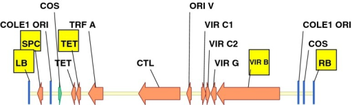 Five regions of the binary vector backbone, LB (T-DNA left border), SPC (spectinomycin resistant gene), TET (tetracycline resistant gene), VIR B (vir B gene), and RB (T-DNA right border) used for Q-PCR analysis to detect vector backbone integration.