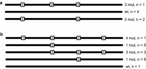 Test scenarios for overlapping amplicon design. Two test scenarios were created with simulated reads, consisting of three clones (a) and five clones (b). Each line represents a clone having different variants (numbered squares), scattered over multiple sections of amplicon design (see Fig. 2)