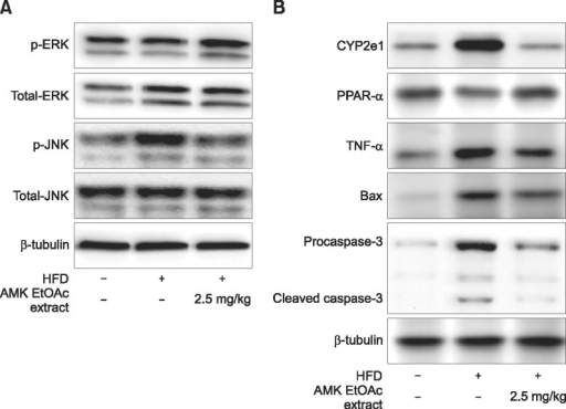 Effect of AMK-EtOAc extract on inflammatory and fatty acid regulation proteins. (A) Mitogen-activated protein kinases proteins including ERK1/2 and JNK1/2 in hepatocytes of mice with NASH. (B) TNF-α, CYP2E1, PPAR-α, Bax, caspase-3, ERK1/2, and JNK1/2 proteins in hepatocytes of mice with NASH. Data are the means ± SD of 10 mice in each group.
