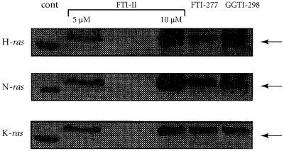 Inhibition of H-ras, N-ras, and K-ras prenylation by FTI-II, FTI-277, and GGTI-298 HL-60 cells were treated with 5 or 10 μM of FTI-II or 10 μM of FTI-277 or GGTI-298 for 24 hours. Cell lysates were analyzed by Western blotting with either a H-ras monoclonal antibody or a N-ras polyclonal antibody or a K-ras monoclonal antibody. Arrows, unprenylated ras bands.