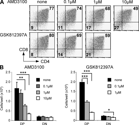 Inhibition of CXCR4 signaling blocks DN3 cell differentiation. 4 × 104 DN3 cells from WT mice were cultured on OP9-DL1 stromal cells for 3 d in the presence of increasing concentrations of AMD3100 or GSK812397A. Cells were harvested, analyzed for the expression of CD4 and CD8 (A), and absolute numbers of CD4+CD8+ DP and CD4−CD8− DN cells recovered (B). Graphs show the mean and SD. n = 3. This experiment is representative of three independent replicates.