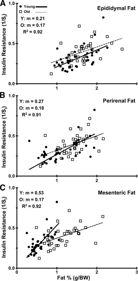 Dependency of insulin sensitivity on abdominal fat depot size. The correlation among epididymal (A), perirenal (B), and mesenteric fat (C) normalized to body weight vs. insulin resistance (1/whole-body SI) in all young and old rats used in the study. Correlations are determined for all young and all old rats using the general linear model. A significant difference between young and old slopes was only found for the mesenteric fat depot, and thus visceral fat. Y, young; O, old; m, slope.