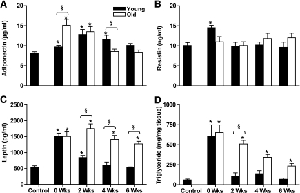 Circulating adipokine and liver triglyceride content. Plasma levels of adiponectin (A), resistin (B), leptin (C), and lipid content (D) in liver in young and old rats exposed to 0, 2, 4, or 6 weeks of caloric restriction. Data are means ± SEMs. Statistical significance was determined using two-way ANOVAs for the effect of time and age with post hoc Tukey tests for individual comparisons. *P < 0.05 for young vs. week 0 and old vs. week 0; §P < 0.05 young vs. old.