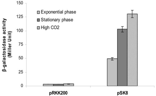 27 Effect of growth phase and CO2 concentration on argC-gca1 promoter activity β-galactosidase assay was performed with A. brasilense Sp7 cells harbouring either pRKK200 (empty vector) or pSK8 and grown up to either exponential or stationary phase at ambient air, and exponential growing cells at high CO2 concentration. The assay was performed on two different occasions. The error bars indicate standard deviation from the three replicates.
