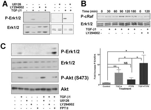 Erk is activated in fibroblasts via the PI3K/c-Raf/MEK pathway.(A) AKR-2B fibroblasts were treated with the PI3K inhibitor LY294002 or MEK inhibitor U0126 (10 µM) 30 minutes prior to addition of TGF-β (2 ng/ml) for 2 h. Cell lysates were probed with an antibody specific to phospho-Erk, blots were then stripped and reprobed for total Erk as a loading control. (B) AKR-2B fibroblasts were treated with TGF-β (2 ng/ml) for the indicated times. Cells were also treated with LY294002 (10 µM) 30 minutes before TGF-β was added for 2 h. Blots were probed using an antibody specific to phospho-c-Raf (Ser338), and total Erk as a loading control. The loading control blot was obtained using the lower molecular mass portion of the same blot. (C) AKR-2B fibroblasts were treated with LY294002, U0126 or Ras inhibitor FPTII (10 µM or 20 µM, respecitively) 30 minutes prior to addition of TGF-β (2 ng/ml) for 2 h. Cell lysates were probed with antibodies specific to phospho-Erk or phospho-Akt (S473) with the blots stripped and reprobed for the corresponding total protein as a loading control. Comparisons of the relative intensity of bands of Phopho-Erk relative to total Erk loading control was expressed as fold increase relative to untreated control (set at 1). Statistical analysis was used to determine if treatments were not significant (NS), or significant at P<0.05 (*) or P<0.01 (**). Analysis was performed on four independent blots and the mean values (±SEM) shown.