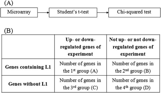 The CU-DREAM extension program. (A) A flow chart illustrating how the microarray data were processed. First, the microarray data for the fields of interest were collected and prepared. The program then computed the status of each gene (upregulated or downregulated) using Student's t-test. Subsequently, the assessed genes were compared with a list of genes containing intragenic L1s. The results showed the associations between the gene regulation status and the presence of an L1 sequence in terms of ORs and p-values. (B) A table indicating the intersection between each experimental result and the genes containing intragenic L1s. These intersections are referred to as groups A through D. Group A includes the genes that are upregulated or downregulated and contain intragenic L1s. Group B includes the genes that are not upregulated or downregulated but contain intragenic L1s. Group C includes the genes that are upregulated or downregulated but do not contain intragenic L1s. Group D includes the remaining genes, which are not upregulated or downregulated and do not contain intragenic L1s.