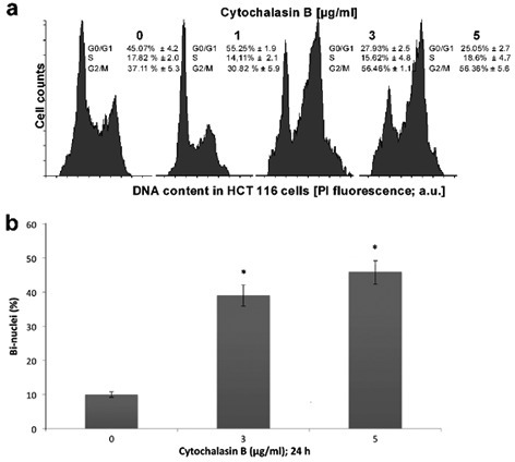 the effect of two cytochalasin drugs biology essay Reagents known to sequester actin monomers two of cytochalasin d, a drug that for the effects of cytochalasin d treatment in.