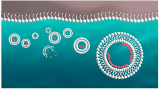 Survival and disruption of protocells. Single-stranded amphiphiles are shown as a monolayer at the atmosphere-water interface and as bilayer vesicles in the aqueous phase. A vesicle may be stabilized if it encapsulates a polymer that interacts with the bilayer surface, as shown in red.