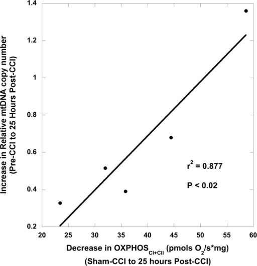 Association between peripheral blood mtDNA copy number and cerebral bioenergetics 25 hours after controlled cortical impact (CCI) traumatic brain injury.There was a significant correlation between the increase in peripheral blood relative mtDNA quantification copy number (RQ), from pre- to post-injury and the decrease in maximal oxidative phosphorylation (OXPHOSCI+CII) in peri-contusional CCI tissue 25 hours post-CCI from sham respiration. CCI: controlled cortical impact traumatic brain injury.