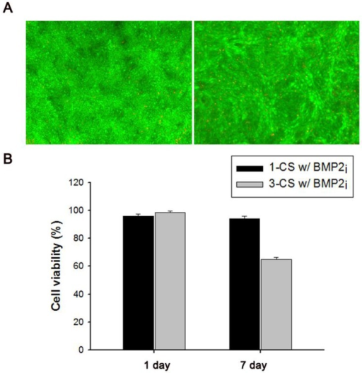 (A) Fluorescence-based live/dead viability assay of one-layered, BMP2-immobilized C2C12 cell sheets (1-CS w/BMP2i) after 1-d (left) or 7-d (right) cultivation. (B) Relative cell viability of one-layered (1-CS w/BMP2i) and three-layered (3-CS w/BMP2i) BMP2-immobilized cell sheet(s) after 1-d or 7-d cultivation.