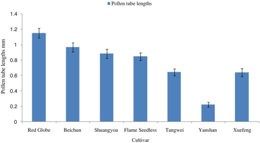 Pollen tube lengths (millimeters ± SE after 24 h) for seven cultivars cultured on pollen medium. Significant (P ≤ .05) differences in tube lengths were not observed between Red Globe, Beichun, and Shuangyou. The other five cultivars were significantly different.