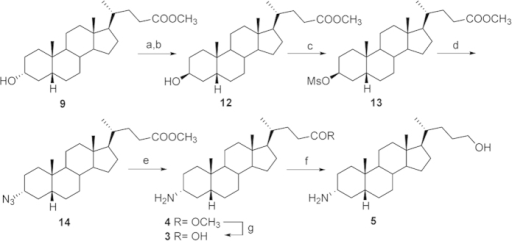 Preparation of α-amino LCA derivatives.Reagents and conditions: a) p-TsCl, pyridine, quantitative; b) CH3COOK, DMF; H2O 5:1, reflux, 81%; c) MsCl, TEA; ethyl ether, 67%; d) NaN3, DMSO, DMF, 150 °C, 67%; e) H2 (1 atm), Pd/C, THF/MeOH 1:1, 44%; f) LiBH4, MeOH dry, THF, 0 °C, 54%; g) NaOH 5% in MeOH/H2O 1:1 v/v, 42%.