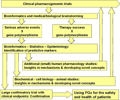 The pathways of pharmacogenetic and pharmacogenomic research. The routes shown here may not be the only ones, but the figure should illustrate how multiple approaches have to be combined to obtain pharmacogenomic knowledge that is of value for the development of new therapeutics or for the improvement of existing therapies