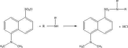 Proposed reaction pathway between dansyl chloride and oxamniquine