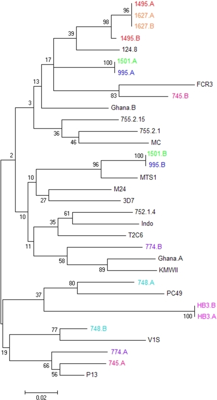 Phylogenetic relationships between VAR2CSA DBL5ε sequences.A neighbor joining tree showing the relationships between 33 different VAR2CSA DBL5ε sequences, including eight sequences derived from samples which are known to have two or more var2csa-type genes/haploid genome. Sequences derived from the same genome are presented in the same color. Bootstrap values for each clade are shown at the nodes of the tree.