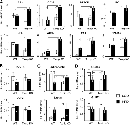 High-fat feeding preferentially promotes PPARγ target gene expression in Txnip- WAT. A: mRNA transcript expression of PPARγ target genes and PPARγ2 in WAT before and after high-fat feeding. n = 8–12 mice per group for each transcript. AP2, fatty acid binding protein 4; PC, pyruvate carboxylase; PEPCK, phosphoenolpyruvate carboxykinase; ACC-α, acetyl-CoA carboxylase-α; FAS, fatty acid synthase; LPL, lipoprotein lipase. B: Transcript expression levels for non-PPARγ target genes PCG1α and UCP2 after HFD. C and D: Adiponectin, leptin, and GLUT transcript expression levels in WAT after SCD vs. HFD. n = 8–12 mice per group.