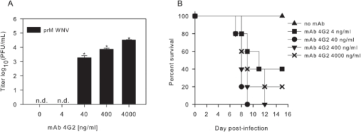 "Effect of anti-E mAb 4G2 on the infectious properties of immature WNV particles in vitro and in vivo.(A) P388D1 cells were infected with immature WNV opsonized with increasing concentrations of 4G2 at MOG 10. At 26 hpi, the supernatant was harvested and virus production was analyzed by plaque assay on BHK21-15 cells. Data are expressed as means of at least two independent experiments performed in duplicate. The error bars represent standard deviations (SD); (n.d.) denotes ""not detectable"". Student's t-tests were used to determine significance; *, P<0.01. (B) Immature WNV was incubated with different concentrations of anti-E 4G2 for 1 hr at 37°C, and injected in mice. A total of 3.4×107 GCPs were given per mouse. Five mice were used for each experimental condition."