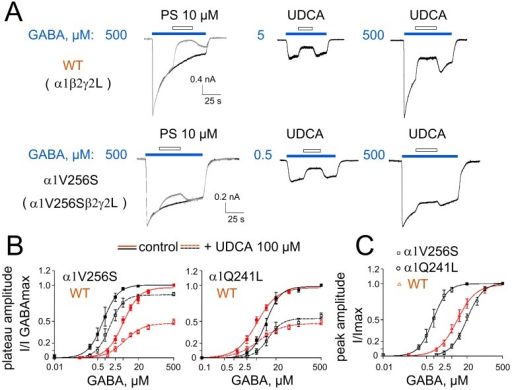 Impairment of GABAAR-block by UDCA in the mutant α1V256S- but not α1Q241L-containing receptors.A. GABA-evoked currents, in response to maximal concentrations and concentrations around EC25, and their inhibition by pregnenolone sulphate (PS) or UDCA 100 µM. B. GABA dose-response curves constructed for the plateau amplitudes measured for control: immediately before UDCA application, which started 15–25 s after the beginning of the GABA application; and for the amplitude of blocked current: at the beginning of UDCA application (first point at a steady-state level). The inhibition of maximal GABA-responses by UDCA is significantly smaller in WT (47±3% of control, n = 7) and mutant α1Q241L receptors (54±2% of control, n = 5, no difference with WT) than in the mutant α1V256S receptors (87±1% of control, n = 5; p = 0.0047 vs WT). UDCA does not significantly modify the EC50 and nH values for GABA in the WT (6±1 µM; 1.2±0.2 versus 5.1±0.5 µM; 1.4±0.1 in control), in the mutant α1Q241L (11.5±1.2 µM; 2.0±0.4 versus 9.8±0.7 µM; 1.9±0.2 in control) and α1V256S (1.5±0.07 µM; 1.6±0.1 versus 0.83±0.03 µM; 1.5±0.06 in control) receptors. C. GABA dose-response curves constructed from peak current amplitude values normalized on maximal GABA-evoked current for the WT (EC50 = 8±0.5 µM; nH = 1.2±0.1; n = 8), α1V256S (EC50 = 0.9±0.03 µM; nH = 1.5±0.06; n = 5) and α1Q241L (EC50 = 20±1 µM; nH = 1.4±0.1; n = 5) receptors of α1β2γ2L-composition expressed in HEK293 cells.