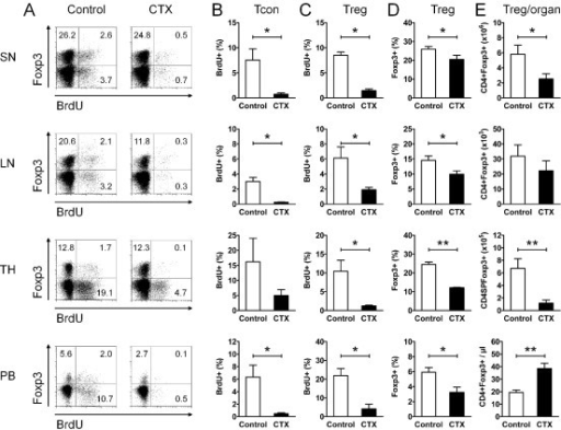 Cyclophosphamide (CTX) inhibits regulatory T cell (Treg) proliferation and causes a gap in Treg numbers. (A-E) Flow cytometry of CD4+Foxp3+ Treg and CD4+Foxp3- conventional T cells (Tcon) in the spleen (SN), lymph nodes (LN), thymus (TH) and peripheral blood (PB) of CTX-treated (CTX) (NZBxNZW) F1 mice with active disease compared to age-matched PBS-treated controls (Control). (A) Representative dot plots show 5-Bromo-2'-deoxyuridine (BrdU) incorporation of CD4+Foxp3+ Treg and of CD4+Foxp3- Tcon from CTX-treated and control mice in the respective compartments. The numbers in the quadrants indicate the percentage of the respective population among CD4+ cells. (B, C) Average percentage of BrdU+ cells among CD4+Foxp3- Tcon (B) and among CD4+Foxp3+ Treg (C). Data represent the means of four to five mice per group from two independent experiments. (D, E) Average percentage of CD4+Foxp3+ Treg among CD4+ T cells (D) and average absolute counts of CD4+Foxp3+ Treg in the respective organ (E). Data represent the means of five to ten mice per group from several independent experiments. (B-E) Error bars indicate standard error of the mean (SEM) (*P <0.05, **P <0.01, CTX vs Control).