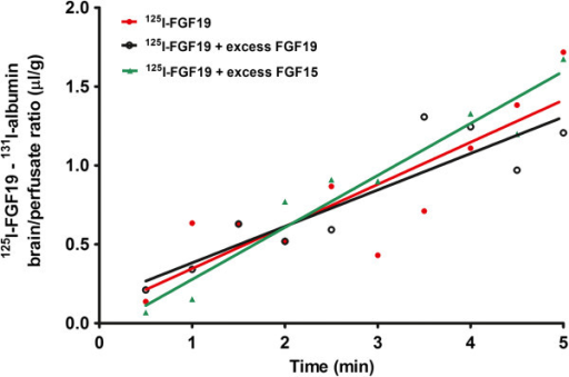 In the in-situ brain perfusion study, there was significant influx of 125I-FGF19 (values already normalized by subtraction of 131I-albumin in the same mouse). Each data point represents one mouse. The presence of 50-fold excess FGF19 or FGF15 did not change the influx of 125I-FGF19.