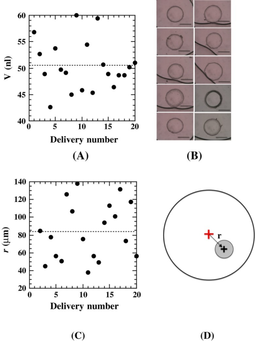 A Repetitive measurements of the delivered volumes of a cubic phase with the conditions of P = 35 pulses/trigger and L = 135 μm. The average actually dispensed volumes, the standard deviation and the coefficient of variation were 50.4, 4.8 nl, and 9.5 %, respectively. B Typical images of the delivered cubic phase boluses of 10 consecutive 50 nl dispensed boluses (bar 500 μm). C Repetitive measurements of the deviation, r, of the delivered bolus center with respect to the well center. D The definition of r for a delivered bolus center (black cross) with respect to the well center (red cross). The well diameter is 5 mm. The figure is not drawn to scale