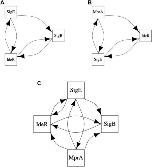 Long feedback loops in M. tuberculosis.Only three long feedback loops are observed in M. tuberculosis (A–C). Note the presence of the same 3-node motifs observed in E. coli (Figure 6A,B) and how these two motifs are entangled in the four node feedback loop (C).DOI:http://dx.doi.org/10.7554/eLife.02863.027