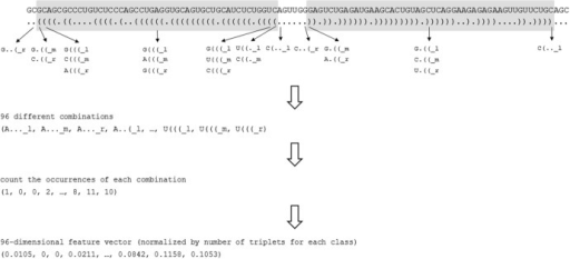 An overview of the workflow to extract different nucleotide-structure triplets.Notes: Only the nucleotides on the 5' and 3' stem arm are considered. The different triplets are counted and then normalized by the corresponding total number of triplets.