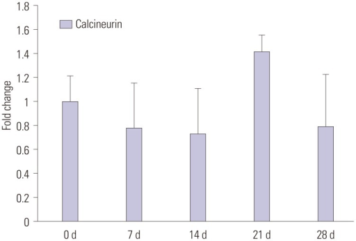 qPCR of calcineurin gene expression in the L5-6 ipsilateral lumbar enlargement of spinal cord at 0, 7, 14, 21, and 28 days after spinal nerve ligation. Data are presented as fold change from control mean±SEM, which represented normalized averages derived from the threshold cycles in 6 to 8 ipsilateral samples.