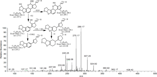 MS/MS Spectra and fragmentation pathway of degraded product with 307.25 m/z.